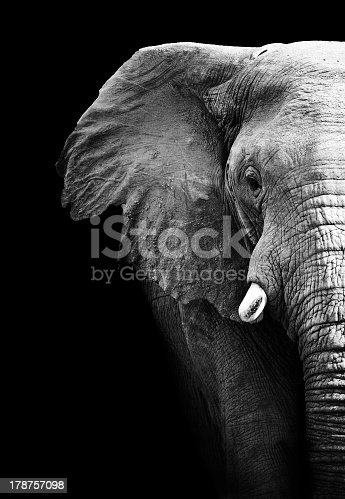 partial image of a black and white elephant stock photo more pictures of africa istock. Black Bedroom Furniture Sets. Home Design Ideas