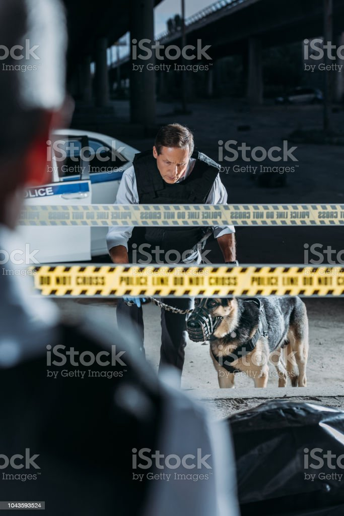 partial view of male police officer standing near corpse in body bag while his colleague standing with german shepherd on leash at crime scene stock photo