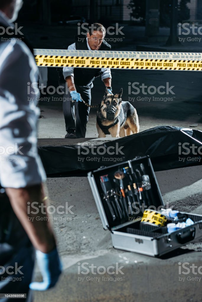 partial view of police officer standing near case with investigation tools while his colleague standing with german shepherd on leash near corpse at crime scene stock photo