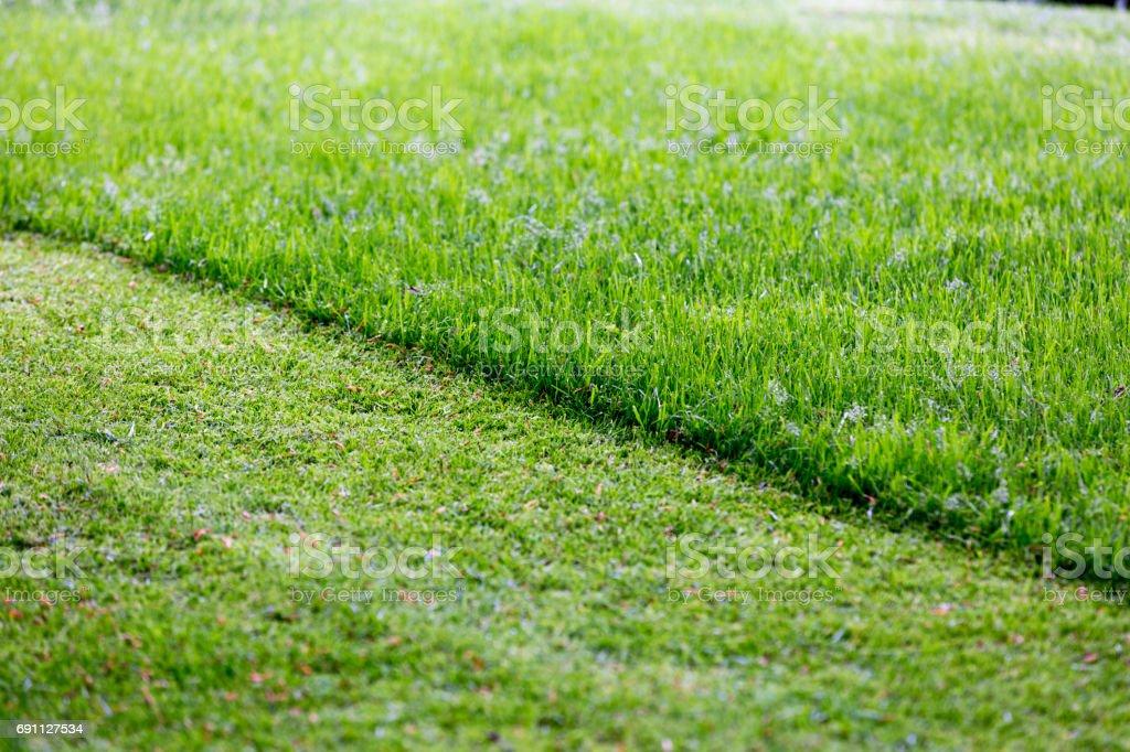 Partially cut grass lawn stock photo