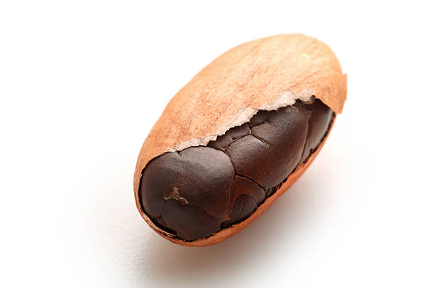 Partially shelled cocoa bean with white background stock photo