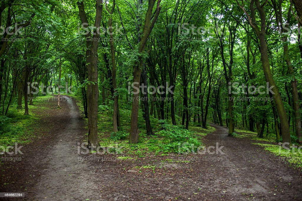 Parting of the ways in a green summer forest stock photo