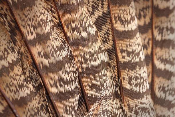 Partridge Feathers Macro ( XL ) stock photo