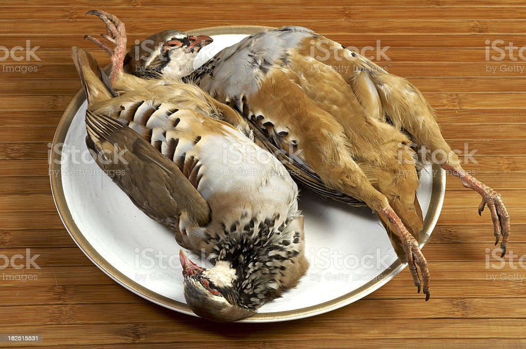Partridges. royalty-free stock photo