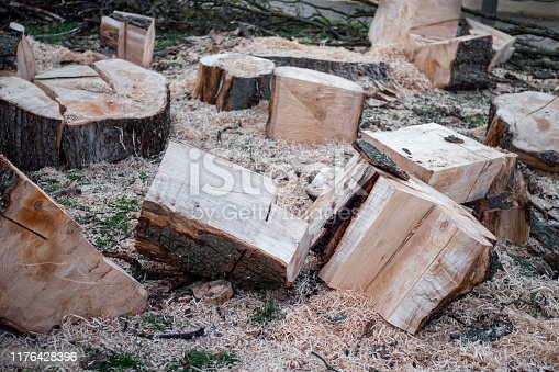 Parts of a sawn tree trunk, unsorted with a lot of sawdust.