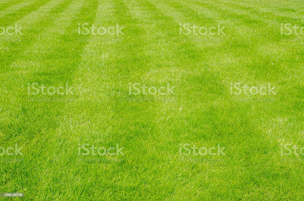 Parttern in grass created by lawn mower royalty-free stock photo