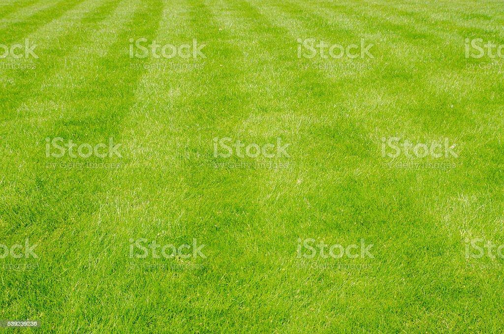 Parttern en hierba creado por segadora foto de stock libre de derechos