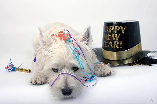 partyhund - silvester mit hund stock-fotos und bilder