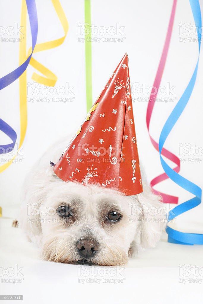 Partyhund – Foto