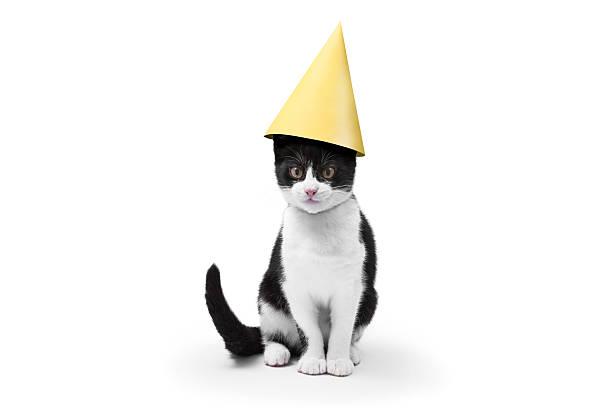 Party cat picture id636099548?b=1&k=6&m=636099548&s=612x612&w=0&h=cxs7cq2dc7qromswd7c2sdat87ojxodxyk1e1penes0=