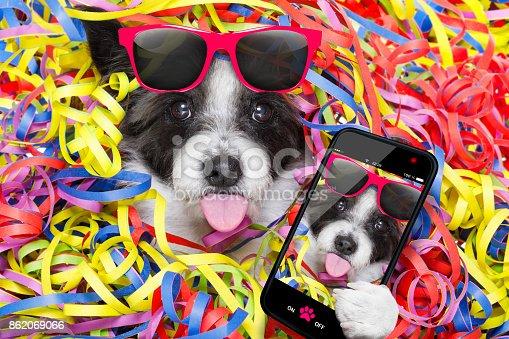 istock party celebration dog 862069066