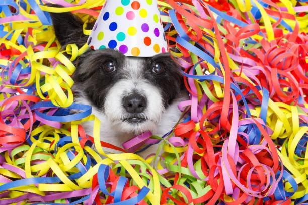 party-feier-hund - silvester mit hund stock-fotos und bilder