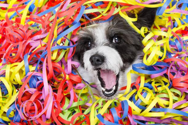 party-feier-hund - faschingssprüche stock-fotos und bilder