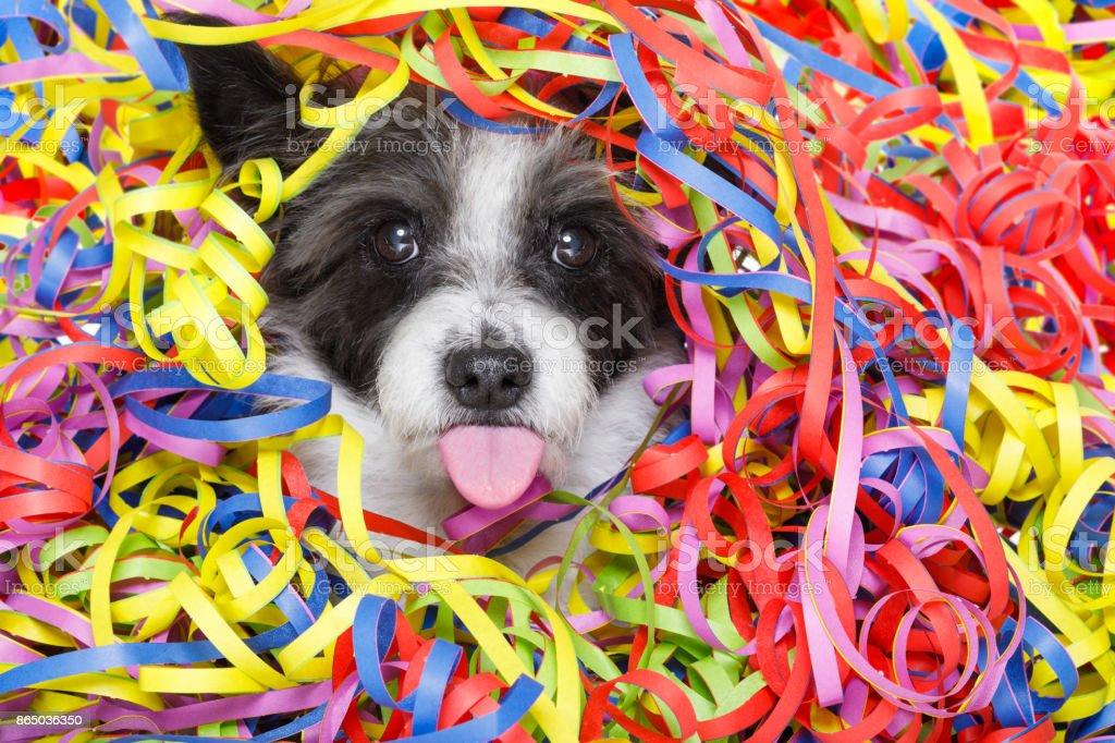 party celebration dog stock photo