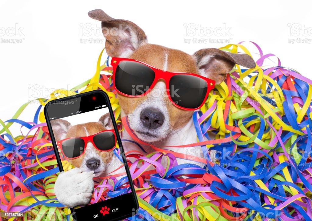 cão de celebração de festa - foto de acervo