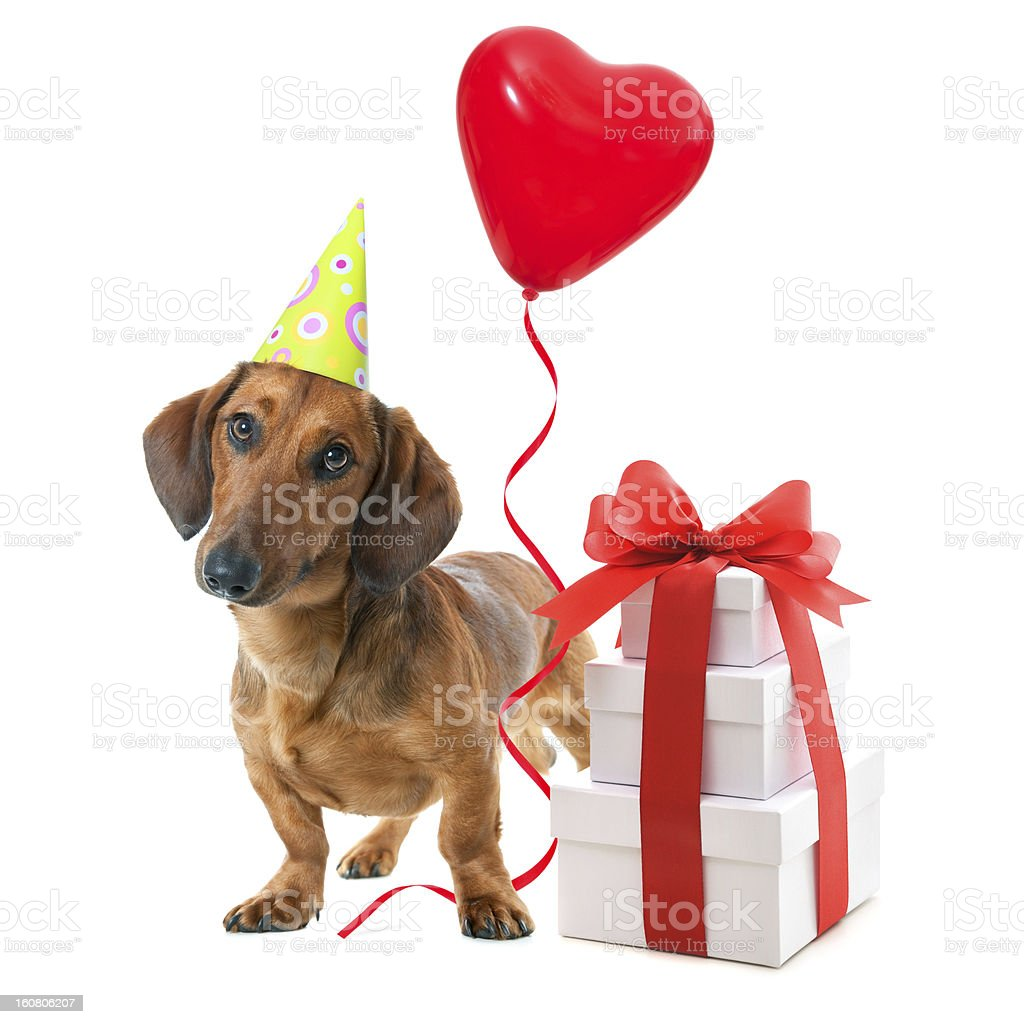 Party dog royalty-free stock photo