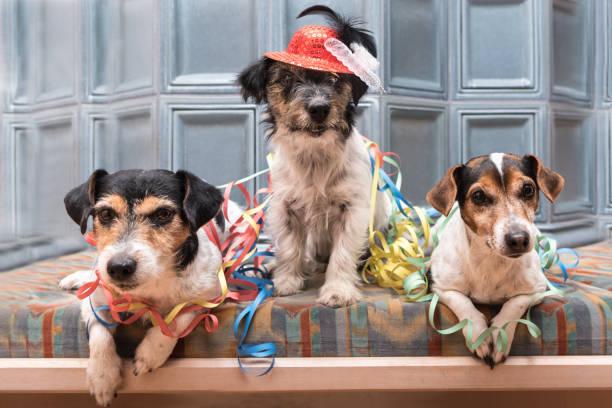 party - jack russell terrier - hunde süß süße hunde, die jede veranstaltung, wie silvester, karneval nicht verpassen - silvester mit hund stock-fotos und bilder