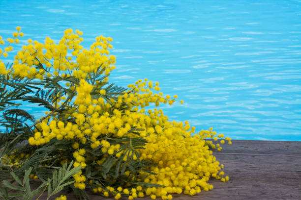 party in pool for women's day background, with mimosa - immagini mimosa 8 marzo foto e immagini stock