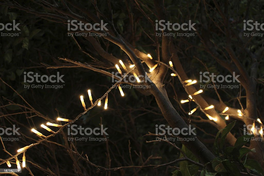 Party lights on dead branches stock photo