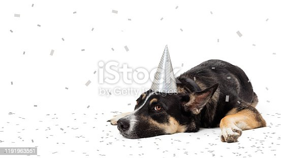 Funny photo of tired party pooper dog lying down wearing hat with confetti falling and on ground