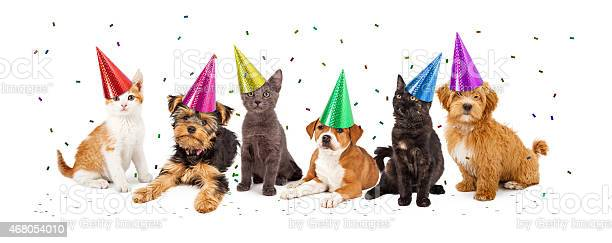Party puppies and kittens with confetti picture id468054010?b=1&k=6&m=468054010&s=612x612&h=wfik6qyc8dxnfm uuiueknuodojv4kpbd5vdcdprzz8=