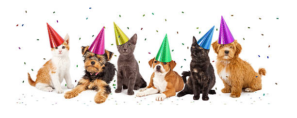 Party puppies and kittens with confetti picture id468054010?b=1&k=6&m=468054010&s=612x612&w=0&h=4sh fqwl wmhxon4bcz93sayymh 5waetk1vvx e0pu=