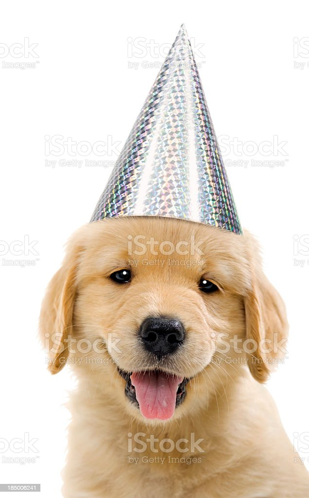Party Puppy, dog wearing silver party hat stock photo