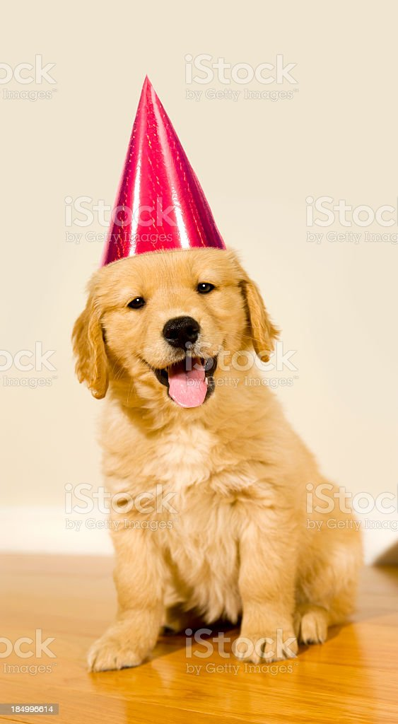 Party Puppy Stock Photo More Pictures Of Affectionate Istock