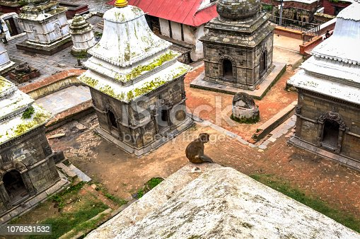 Monkey overseeing the Pashupatinath Temple, the most famous and sacred Hindu temple complex, an UNESCO World Heritage Site located on the banks of the sacred Bagmati River, Kathmandu Valley, Nepal.