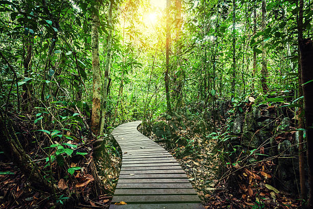 Passage Through the Jungle, Borneo Island Boardwalk in the rainforest island of borneo stock pictures, royalty-free photos & images
