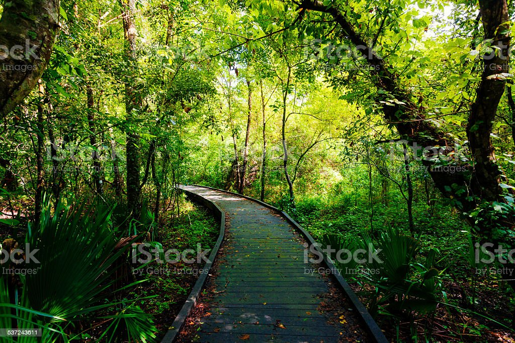 Passage Through the Jungle, Rainforest stock photo