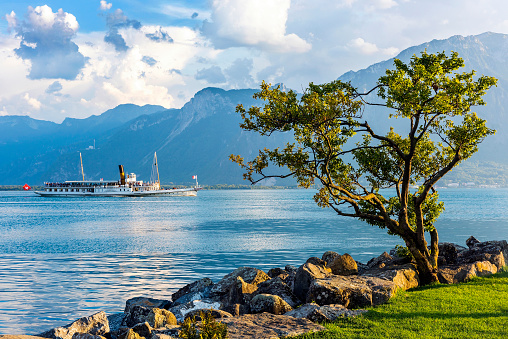 Passenger Craft with single tree on shore in Montreux city, Switzerland