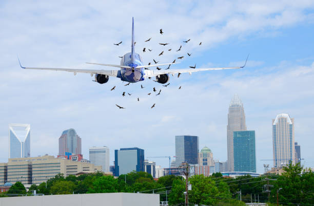 Passenger jet airliner plane with birds in front of it on when taking picture id968155942?b=1&k=6&m=968155942&s=612x612&w=0&h=l0kdtzpxvguzd0qk5kmm8izeynmcuww8cvxfe8jyppk=