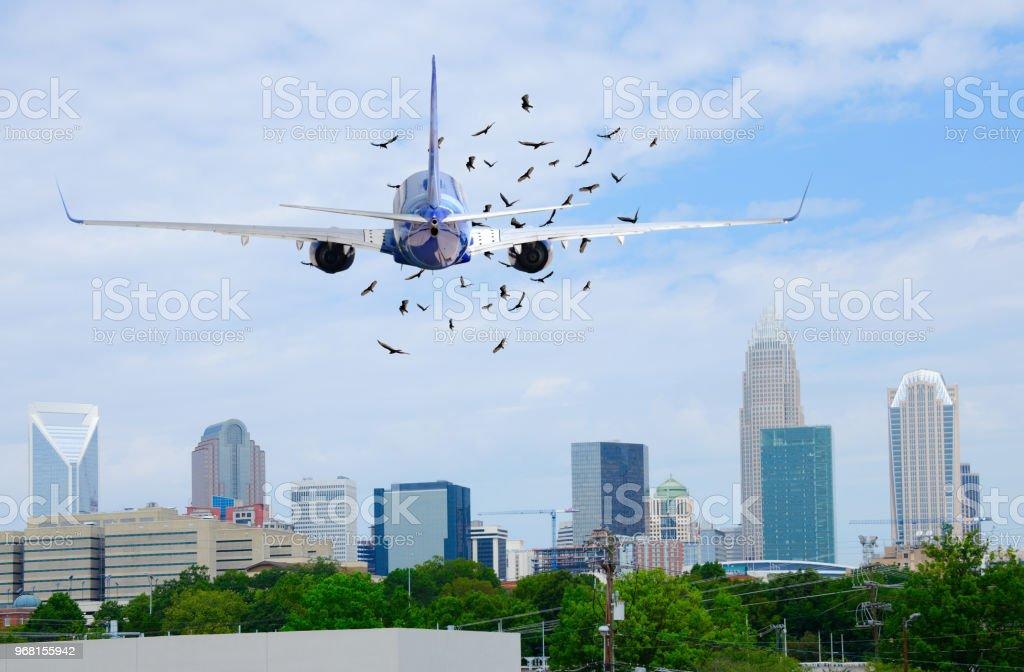 Jet Airliner Passagierflugzeug mit Vögel vor ihm auf, wenn ausziehen – Foto