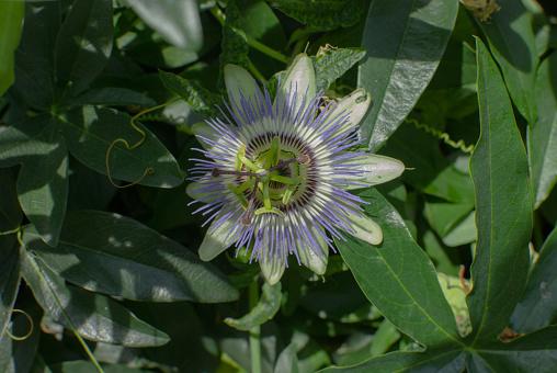 태양 아래 시계 또는 열정 꽃 0명에 대한 스톡 사진 및 기타 이미지