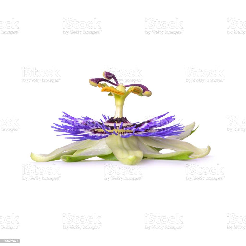 Passiflora passionflower isolated on white background. Big beautiful flower. stock photo