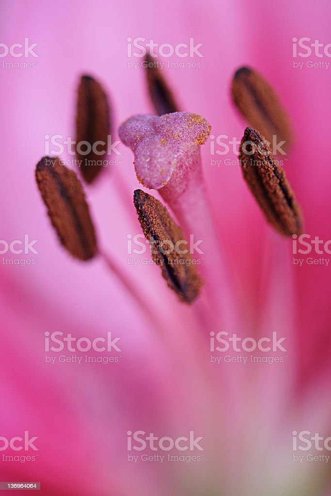 Passionately Pink stock photo