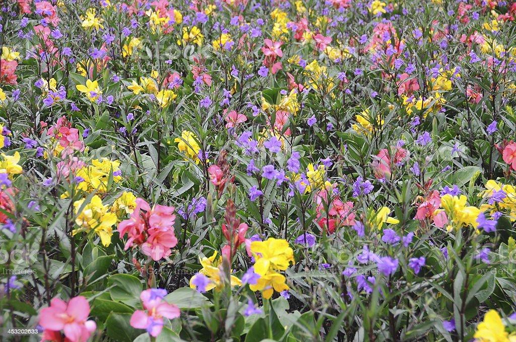 Paste Irises stock photo