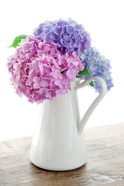 Pastel color hydrangea flowers stock photo