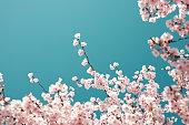 パステル色の桜の花