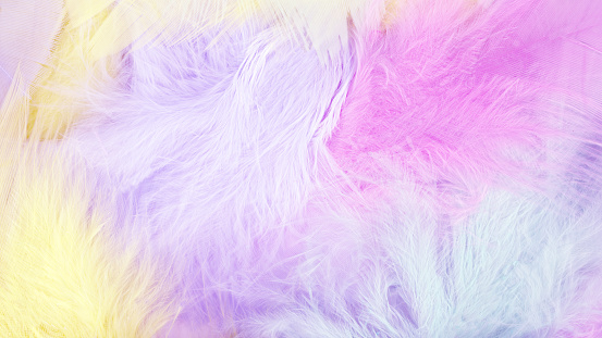 Pastel colorful feather background