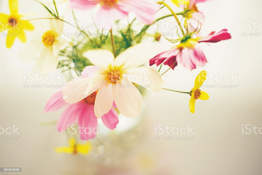 Pastel Cosmos Flower Bouquet In Glass Jar Stock Photo & More ...