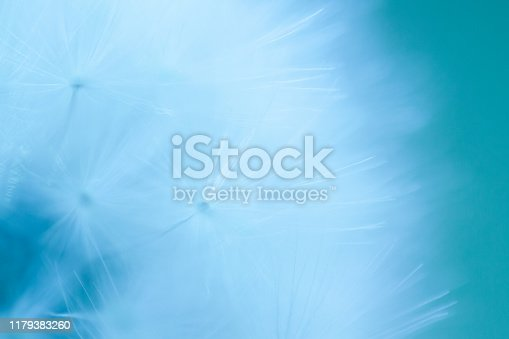 157681198 istock photo Pastel Dandelion Seed Close Up 1179383260