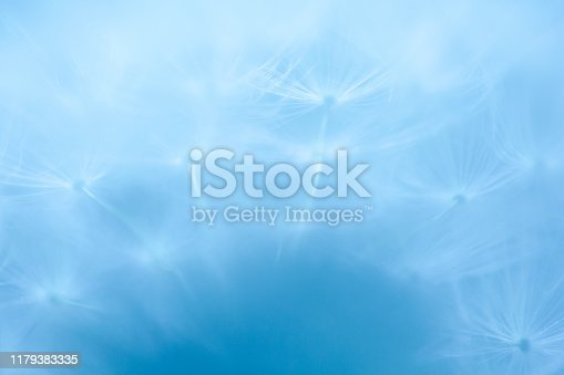 157681198 istock photo Pastel Dandelion Seed Close Up 1179383335