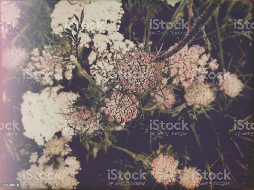 Pastel Flower Immersion stock photo