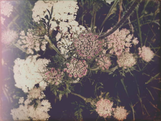 pastel flower immersion - vintage flowers stock photos and pictures