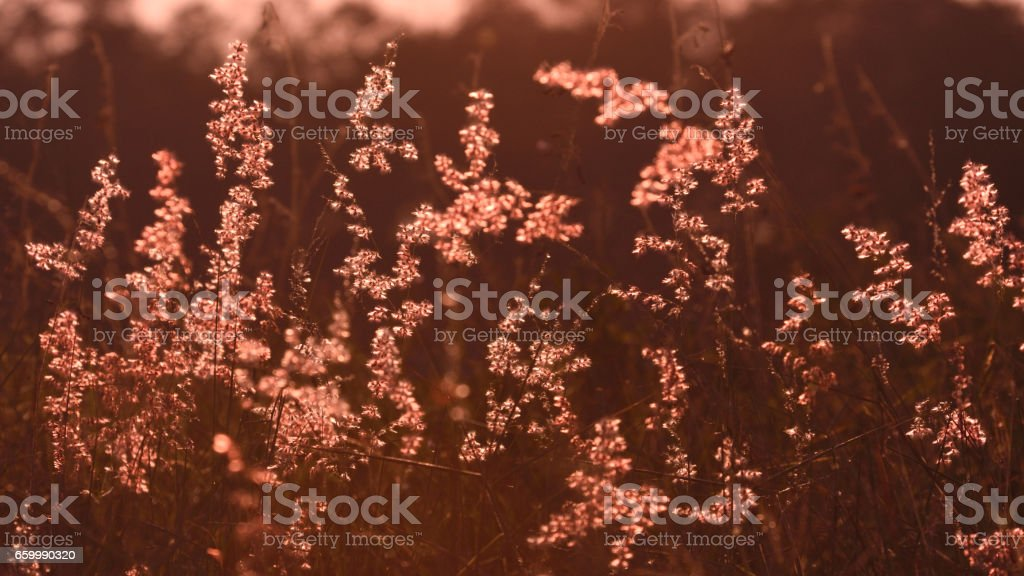 pastel grass flowers in the field stock photo
