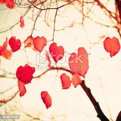 istock Pastel Heart-shaped autumn leaves 509514231