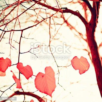 istock Pastel Heart-shaped autumn leaves 509514361
