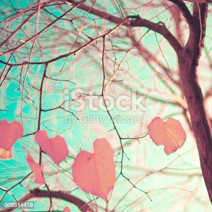 istock Pastel Heart-shaped autumn leaves 509514419
